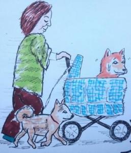犬乳母車1